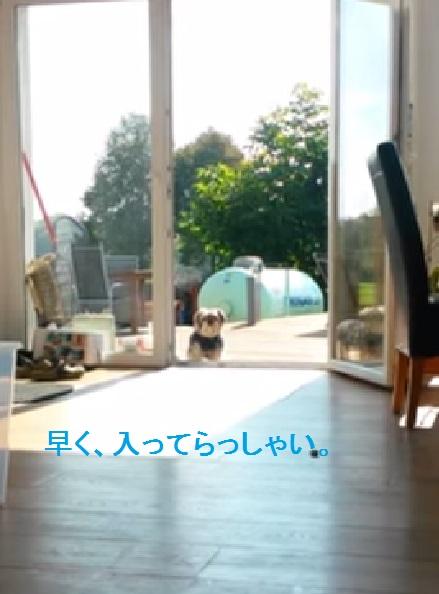 dog-thinking02