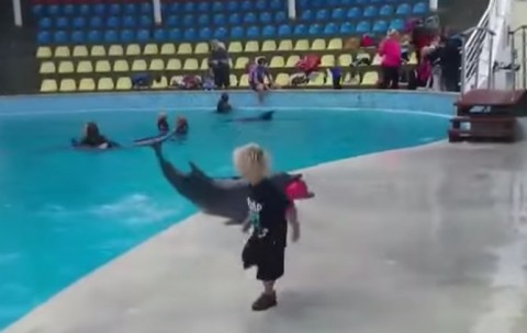 dolphin-playing-with-kid02