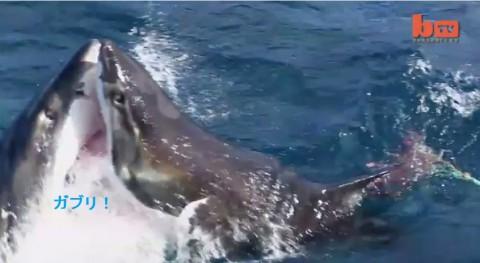 shark-vs-shark02