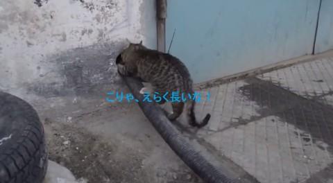 smart-cat02