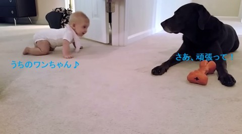 first-crawl-baby-and-dog02