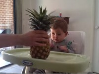baby-scared-of-pineapple01