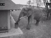 cleaner-elephant01