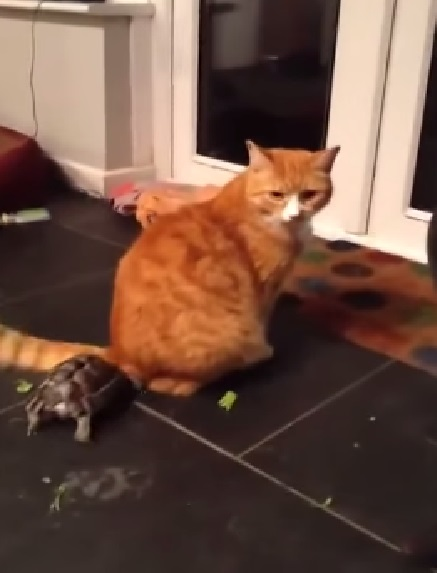 tortoise-vs-cat02