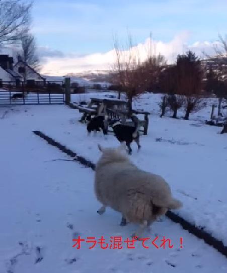 lamb-and-dog02