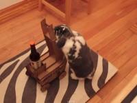 my-rabbit-cart01