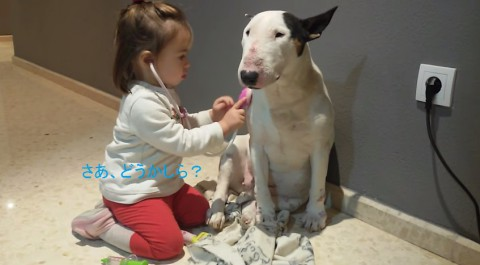 little-girl-and-bull-terrier02