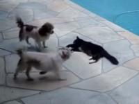 cat-pushes-dog01