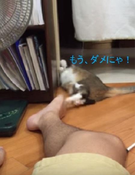 acting-cat02