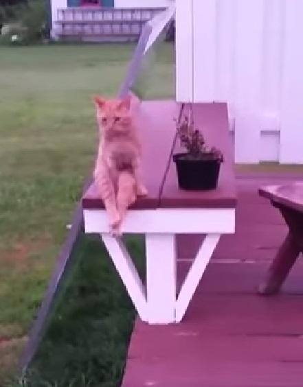 cat-sits-like-human02
