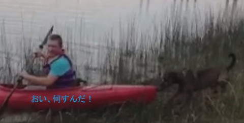 funny-dog-vs-kayak02