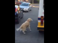 golden-retriever-and-ice-cream-man01