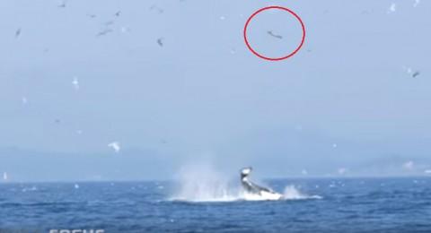 orca-punts-seal-80-feet02