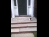 puppy-afraid-of-stairs01