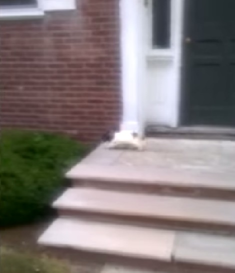 puppy-afraid-of-stairs02