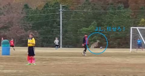 deer-love-playing-soccer02