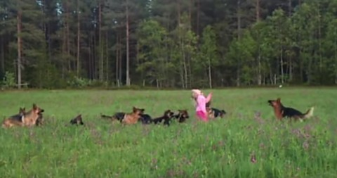litle-girl-and-german-shepherds02