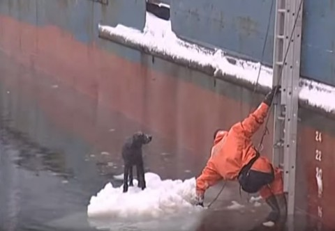 russian-sailors-rescue-dog-stranded03