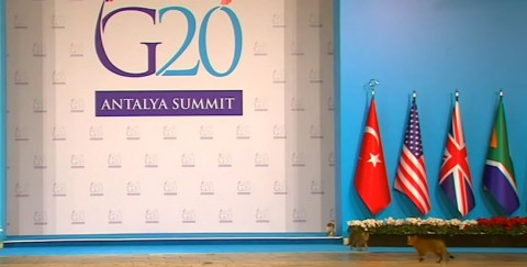 turkish-cats-on-g20-summit02