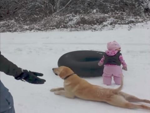 dog-slides-across-snow02