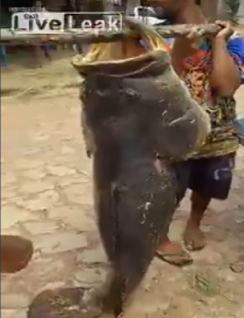 fishermen-catch-monster-fish02