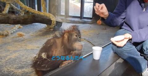monkey-sees-magic-trick02