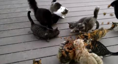 noisy-cats02