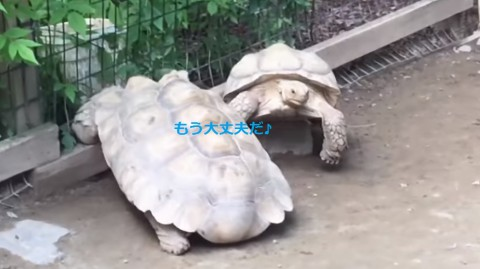 turtle-rescues-his-stranded-friend02