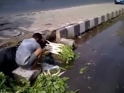 wash-vegetables-in-sewer-water02