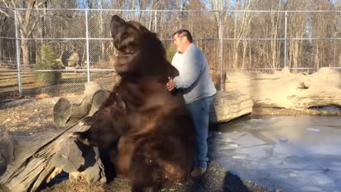 big-bear-plays-with-man03