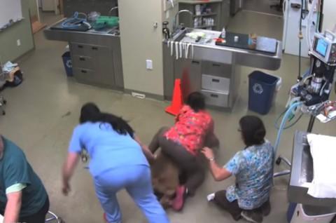 dog-at-veterinarys-office02