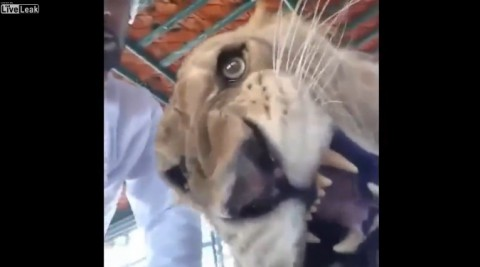 lion-reacts-to-video-selfie01