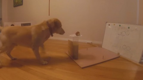 labrador-uses-the-archimedes-principle02