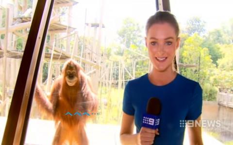 smiling-orangutan02