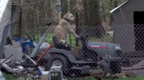broadcast-interrupted-by-dog-on-lawnmower02