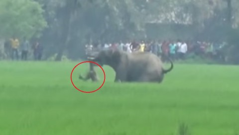 elephant-kills-man-after-rampaging01