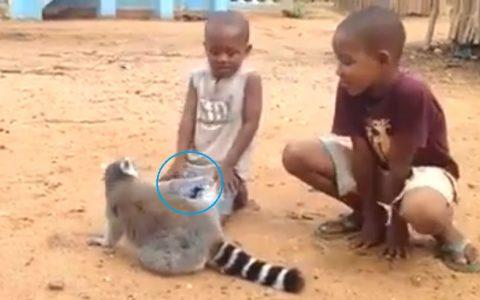 funny-lemur02