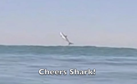 great-white-shark-breaching-shot01