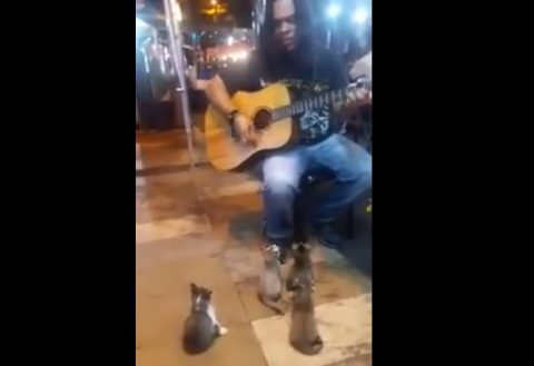 kittens-listening-to-the-busker-cute01