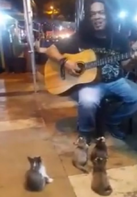 kittens-listening-to-the-busker-cute02