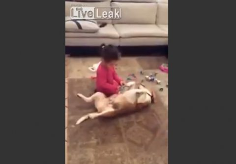 little-girl-perfoms-surgery-on-dog02
