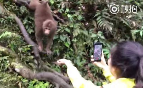 monkey-snatch-the-smartphone01
