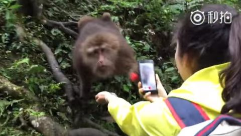 monkey-snatch-the-smartphone02