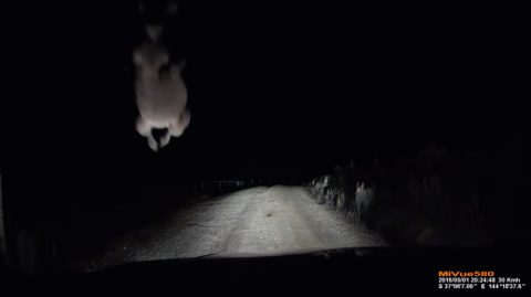 dash-cam-kangaroo-attacks-car02