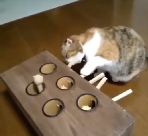ingenious-cat-toys02