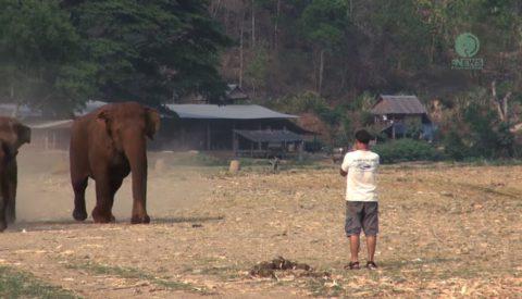 man-call-elephan02
