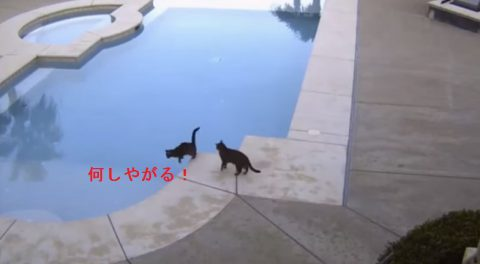 cat-pushes-brother-into-pool02