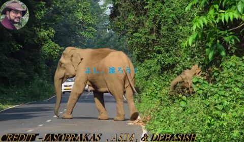 elephant-chasing-cycle-rider02