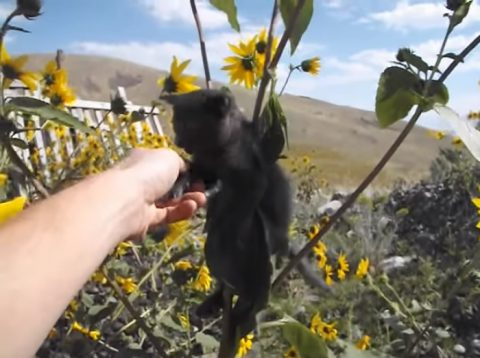 kitten-stuck-in-a-sunflower02