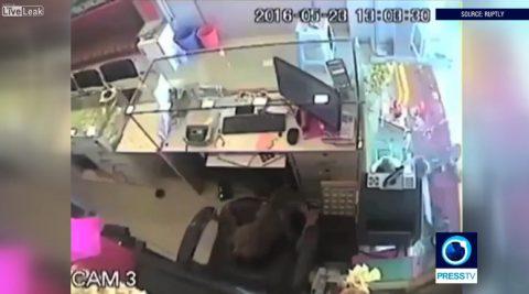 monkey-robs-jewellery-shop02